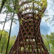 South Zealand Tour – Climb the Forest Tower!